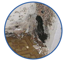 Mold & Water Restoration